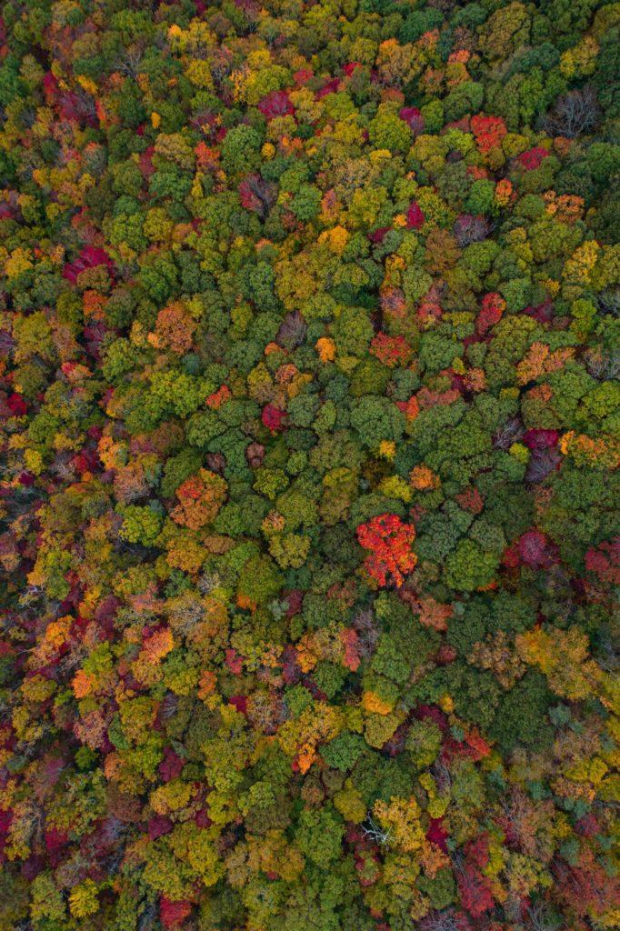 Gekleurd bos bovenaanzicht